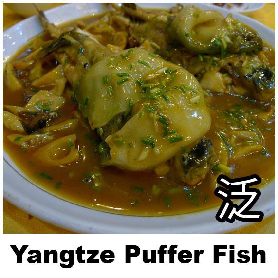 Yangtze Puffer Fish